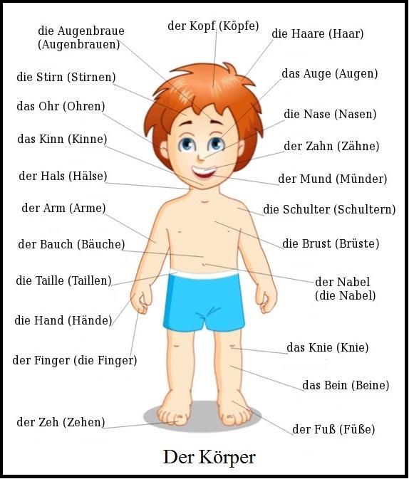 Körperteile auf Deutsch - Képes szótár